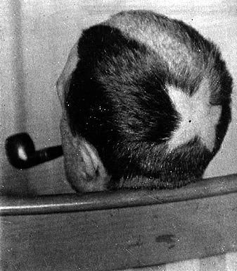 Marcel Duchamp, Tonsure, Star Haircut